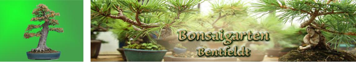 Bonsaigarten-Bentfeldt